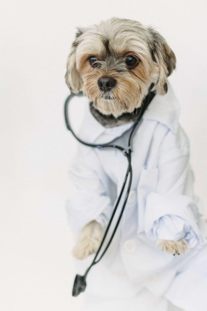 hond doktor